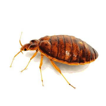 pest thumb